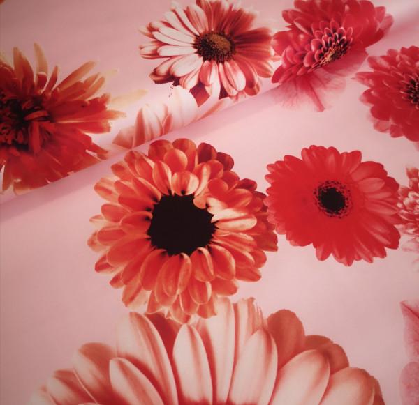 Baumwoll-Stretch-Druck floral